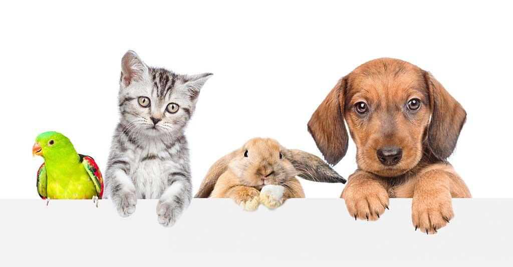 PetNup Anlaşması Yapmanın Faydaları, ortak velayet, boşanmada evcil hayvan velayeti, çocuklar ev hayvanları,